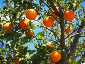 Orangen, Suppe