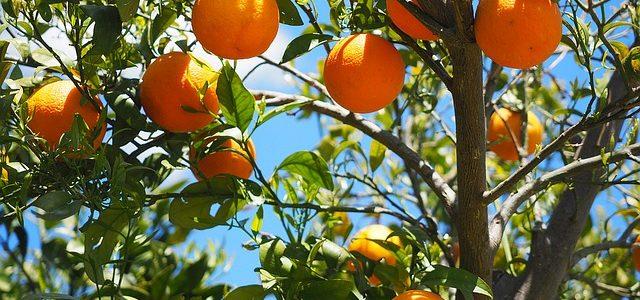 Rote Rüben–Orangen-Suppe